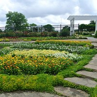 flowers in Gage Park