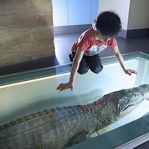 Dare you stand on the back of the caiman!