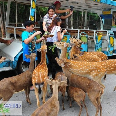 Feed the deers if you want. Taken from my blog - oneweirdglobe.com
