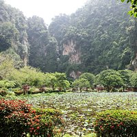 THe huge lily ponds have a backdrop of the limestone hills