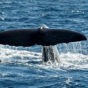 MobyDick-Tous Azores Whale Watching