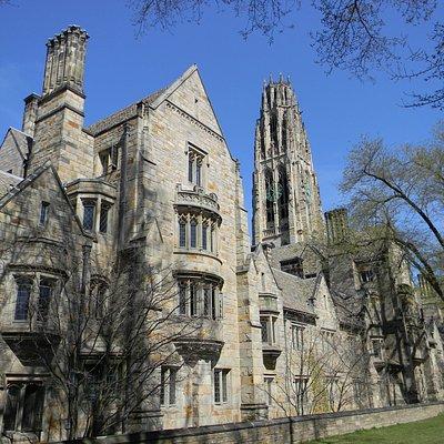 Yale 6