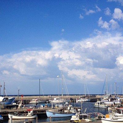 Odden harbour