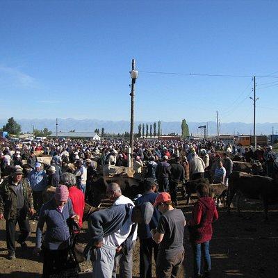 Livestock Market3