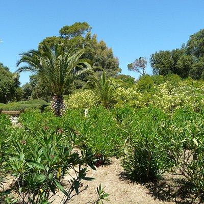 Végétation méditérranéenne