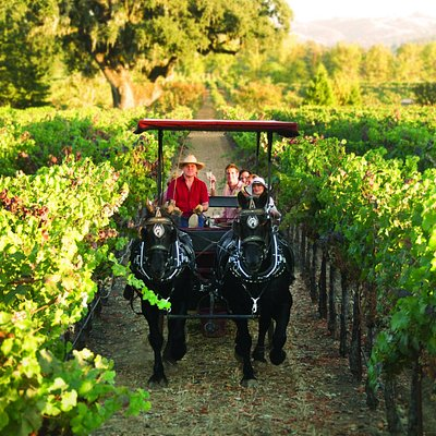 Travel deep into the vines of Sonoma's wine country on a horse-drawn carriage.