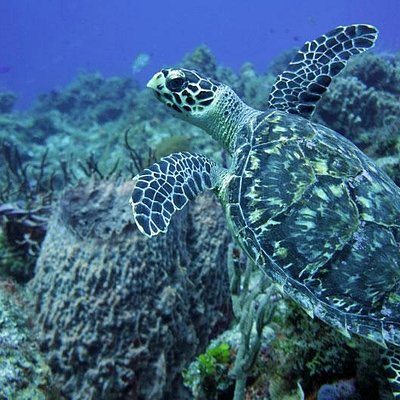 Diving Cozumel with DiveMex