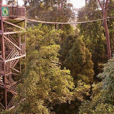the canopy bridge