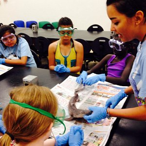 More shark dissection