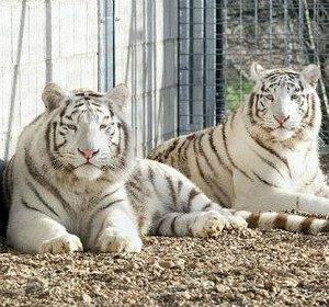 Mohan & Shiva