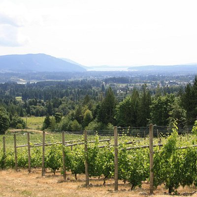 View from the top of the vineyard
