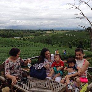 Chuifong Tea field - Chiangrai Thailand