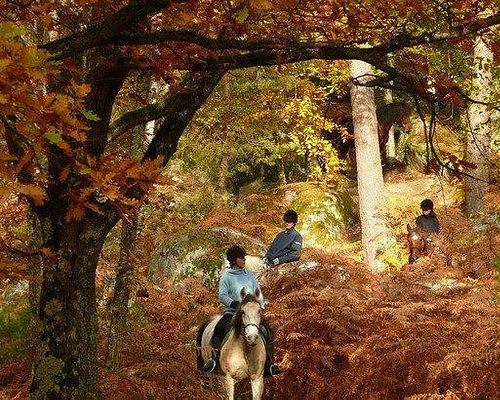 La forêt à cheval en automne avec Horse Dreams