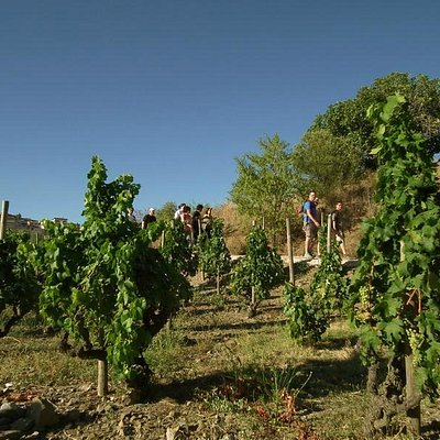 Walking among vineyards in Priorat, Terra Alta,.|Senderismo entre viñedos en Priorat, Terra Alta