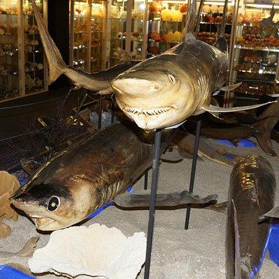 Approcher le requin sans peur !