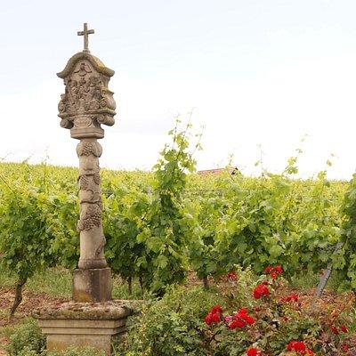 Своеобразная защита виноградника