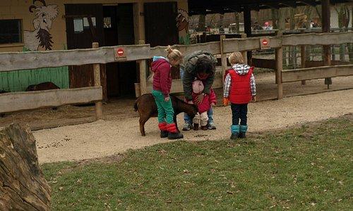 Kinder im Tiergarten