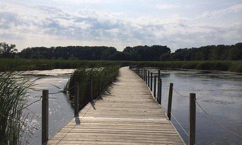 board walk/bridge crossing marsh
