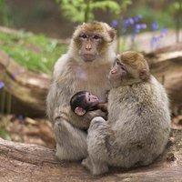 2 adultes entourant un nouveau-né