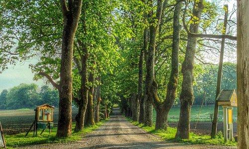 Alleen opp til Røed gård, sett fra det flotte naturreservatet Grønliparken