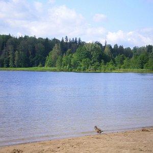 Парк у озера Пюхаярве