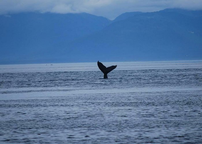 Whales are amazing creatures!