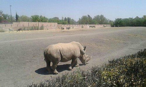 Rhino at Wameru