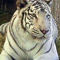 Tiger Preservation Center