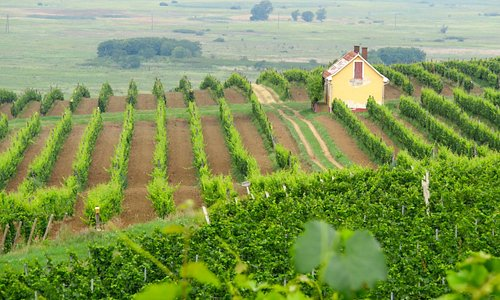 View from hillside vineyard of winery.