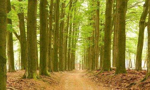 Ook schitterende bossen