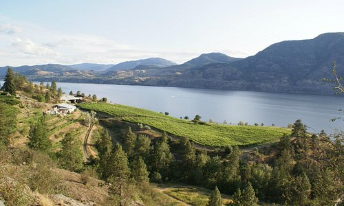 Vista Ridge Vineyards/Skaha Lake