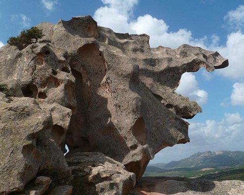 Animal de pierre