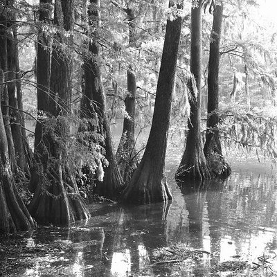 Greenfiled Lake B/W