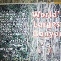 The Banyan Tree flier