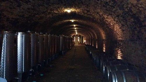 Winery cellar