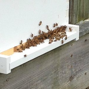 one of our honey bee hives