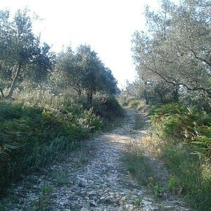 The trail was a mix of grass, tracks and road.