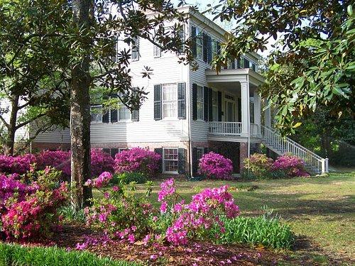 Azaleas Northwest Corner of Manor House