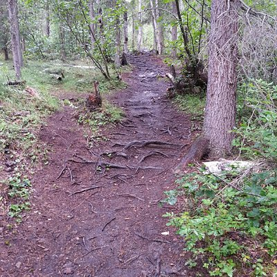 Uphill trail; tree roots provide secure footing