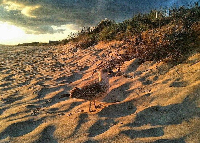 Sunset on Madaket Beach
