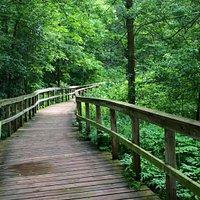 Walking on the boardwalk in the marsh