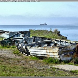 Sea salmon fishing boats.