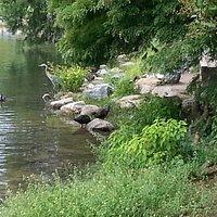 Lake Ella wildlife