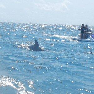 Delfine auf unserer Jet Ski Safari