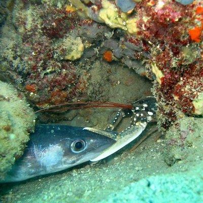 Conger eel vs.Lobster