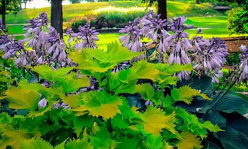 Flowers in the formal garden