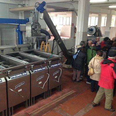 visita all'impianto di estrazione olio extra vergine di oliva