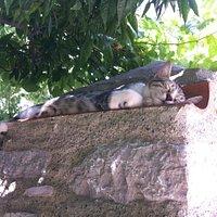 Eski Datça ve kedi