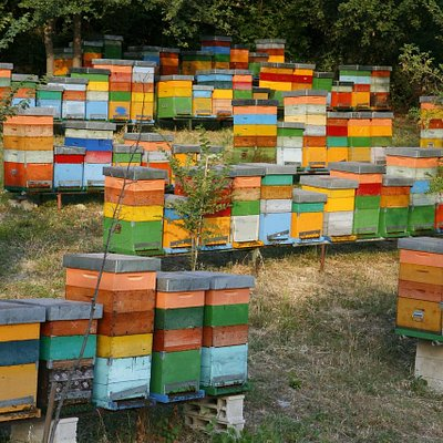 un nostro apiario