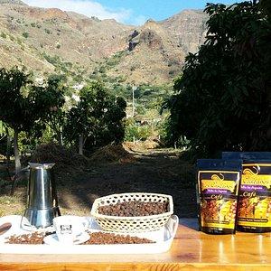 Cafe Finca Los Castaños - Arábica Typica